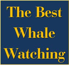 Click here for more information on the best whale watching in the area